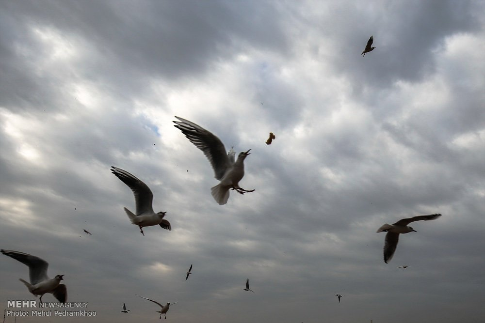 https://ifpnews.com/wp-content/uploads/2018/12/Iran%E2%80%99s-Karoon-River-Hosting-Migratory-Birds-16.jpg