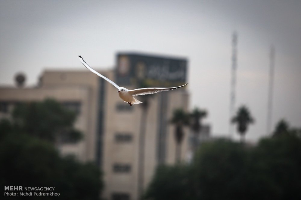 https://ifpnews.com/wp-content/uploads/2018/12/Iran%E2%80%99s-Karoon-River-Hosting-Migratory-Birds-17.jpg