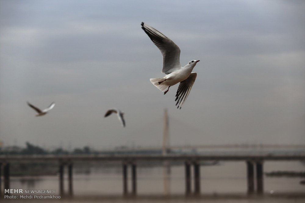 https://ifpnews.com/wp-content/uploads/2018/12/Iran%E2%80%99s-Karoon-River-Hosting-Migratory-Birds-18.jpg