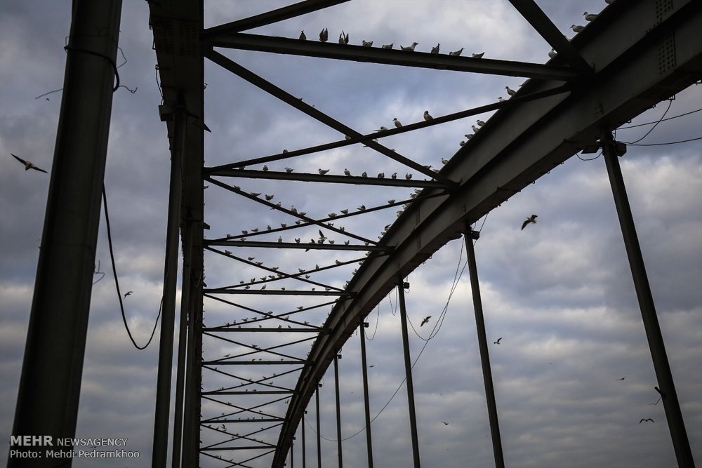 https://ifpnews.com/wp-content/uploads/2018/12/Iran%E2%80%99s-Karoon-River-Hosting-Migratory-Birds-2.jpg
