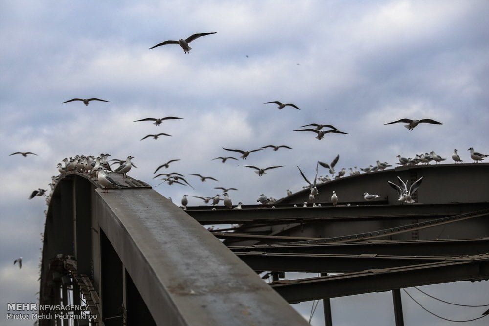 https://ifpnews.com/wp-content/uploads/2018/12/Iran%E2%80%99s-Karoon-River-Hosting-Migratory-Birds-5.jpg