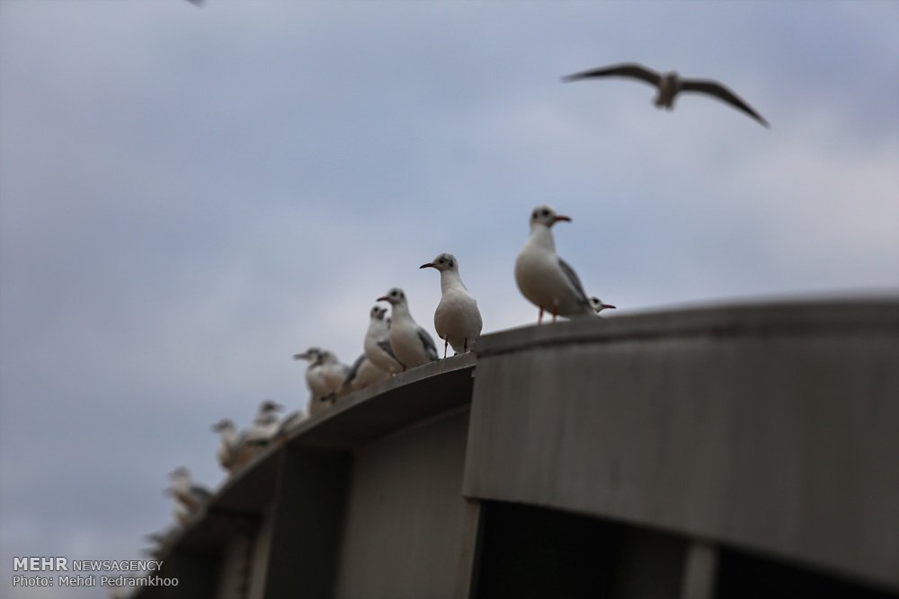 https://ifpnews.com/wp-content/uploads/2018/12/Iran%E2%80%99s-Karoon-River-Hosting-Migratory-Birds-6-1.jpg