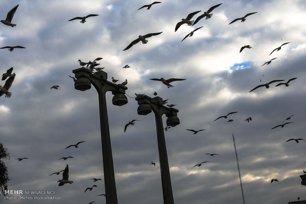 https://ifpnews.com/wp-content/uploads/2018/12/Iran%E2%80%99s-Karoon-River-Hosting-Migratory-Birds-7.jpg