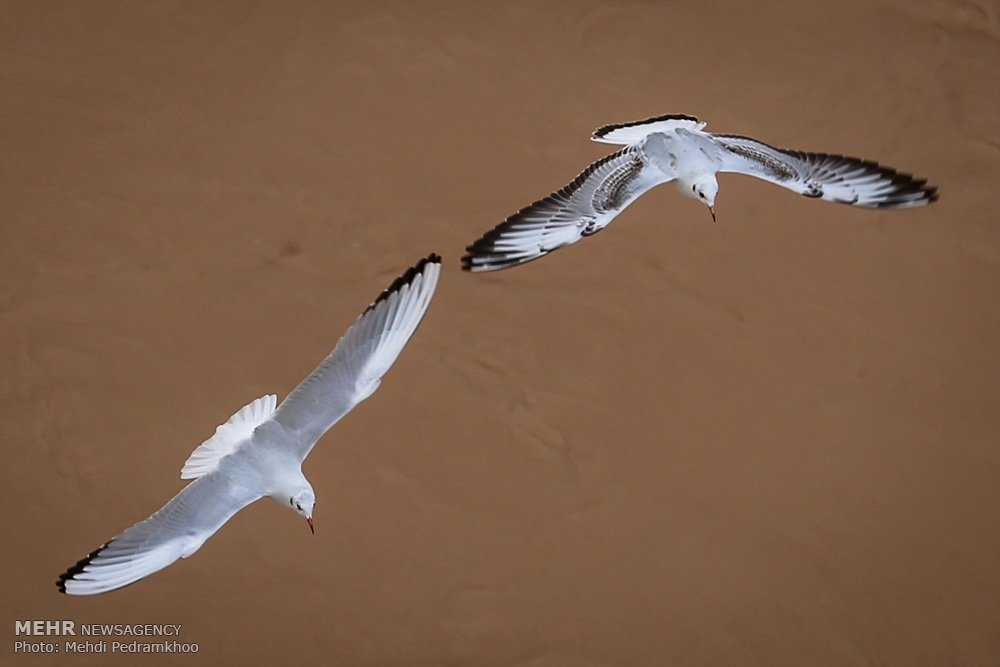 https://ifpnews.com/wp-content/uploads/2018/12/Iran%E2%80%99s-Karoon-River-Hosting-Migratory-Birds-8.jpg