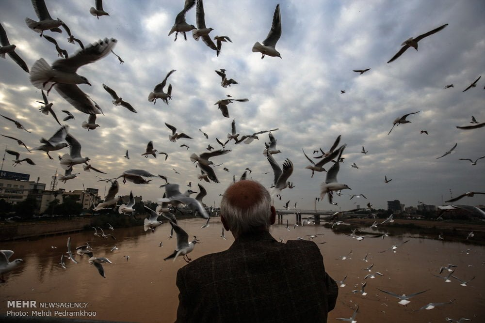 https://ifpnews.com/wp-content/uploads/2018/12/Iran%E2%80%99s-Karoon-River-Hosting-Migratory-Birds-9.jpg