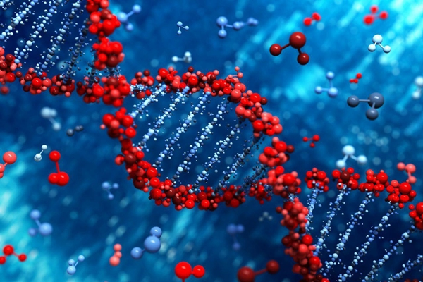 Researchers Discover New Gene Related to Heart Muscle Diseases