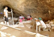 Remains of Ancient Neanderthal Horses Found in Iran's Qazvin