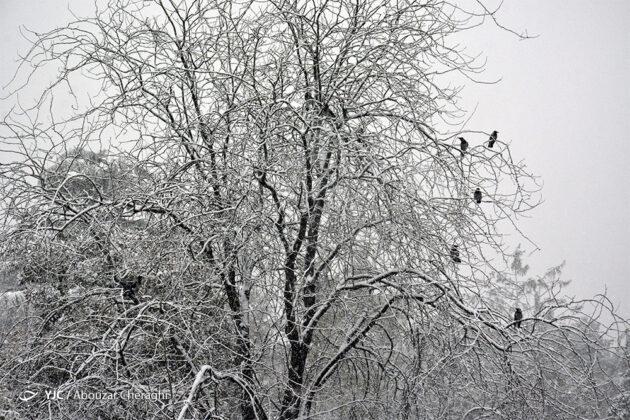 Autumn Snowfall in Tehran