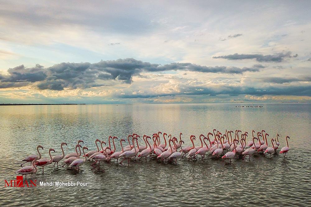 Migratory Birds in Iran's Miankaleh Peninsula (27)