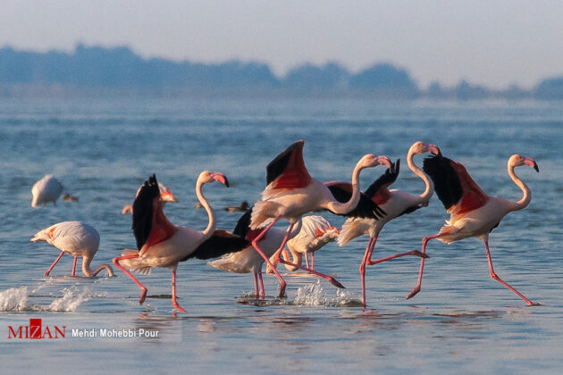 Migratory Birds in Iran's Miankaleh Peninsula
