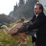 Returning Vulture to the Wild at Lavandevil Wildlife Refuge
