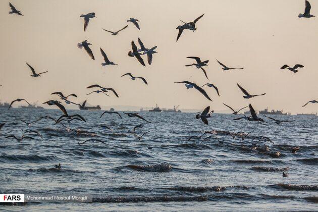 Iran's Wetlands; Habitat of Migratory Birds in Cold Season
