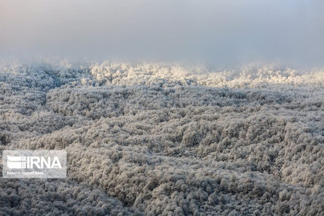 Hyrcanian Forests during Winter (1)
