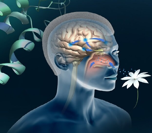 Iran Develops Olfactory Test to Diagnose Alzheimer's Disease