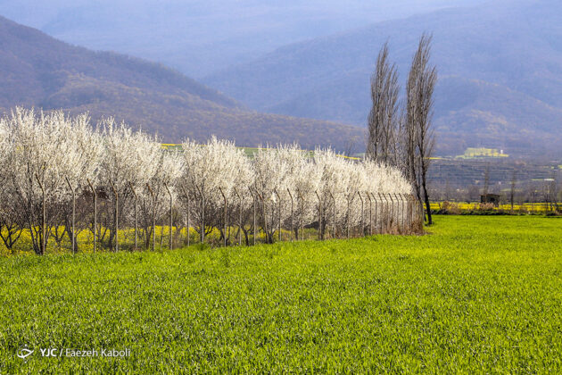 Spring in Northern Iran