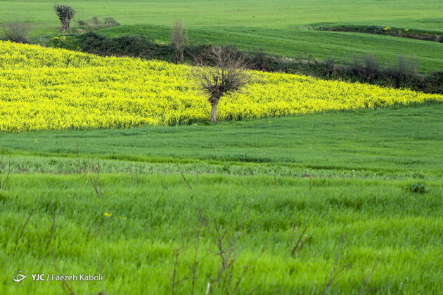 Gorgeous Blossoms Herald Arrival of Spring in Northern Iran