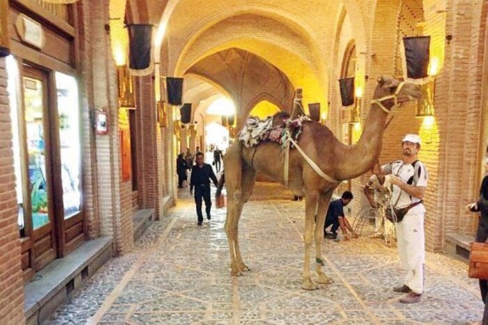 Iranian Adventurer Cuts Short Camel Journey Around World over COVID-19