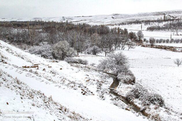 Snowy Bojnurd