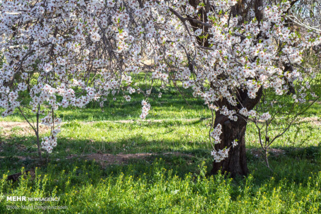 Iran Nature in Spring