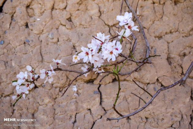Iran's Beauties in Photos: Spring Blossoms in Mehriz