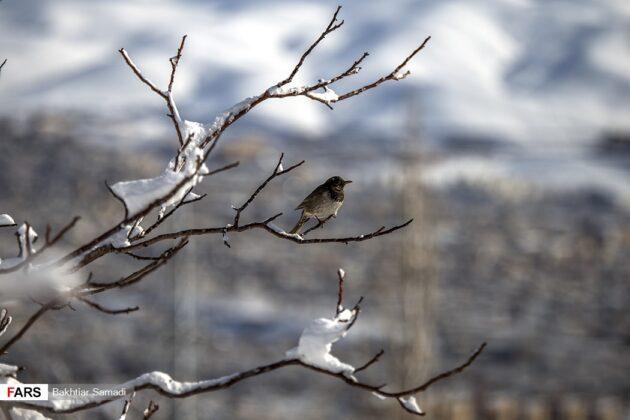 Snowy Days in Western Iran