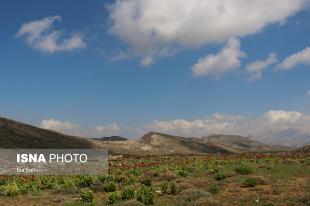 Flowers on Southwestern Iran 5
