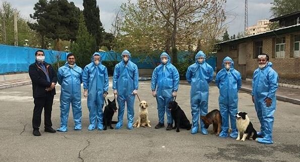 Iran Training Sniffer Dogs to Identify Coronavirus