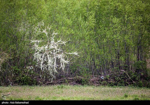 Spring Blooms in Hanam, Lorestan 16