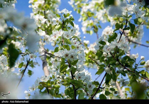 Spring in Hanam, Lorestan 6