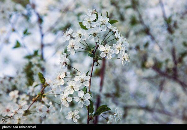 Spring blooms in southwestern Iran
