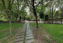Trees Named after Blood Donors in Iran's Mashhad