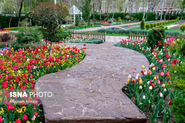 Tulip Festival Underway in Iran with No Visitors 1