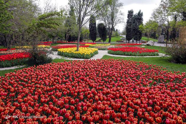 Tulip Festival of Mashhad 7