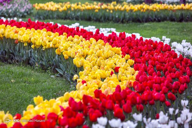Flowers of Iran