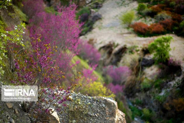 Wonderful Nature of Western Iran