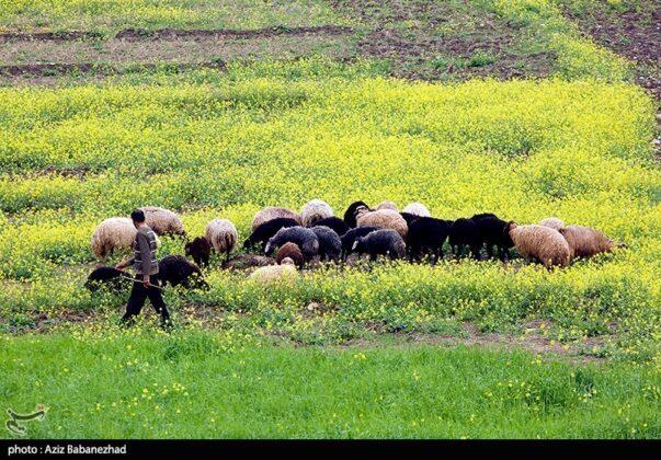 Wonderful Nature of southwestern Iran 5