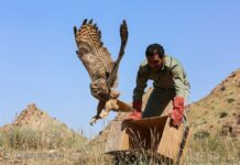 Releasing Birds of Prey Back to Qom Wilderness