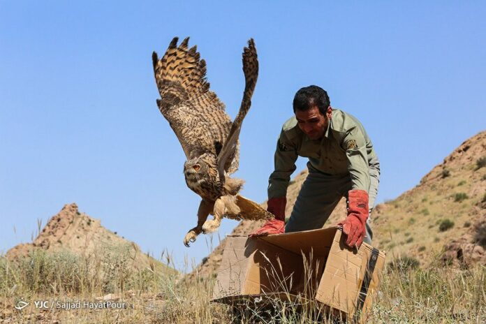 Releasing Birds of Prey Back to Qom Wilderness