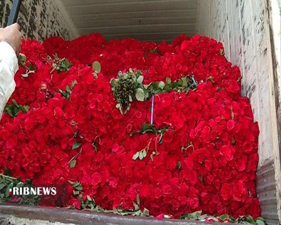 Senhora iraniana divorciada recebe 1 milhão de rosas como parte do casamento 3