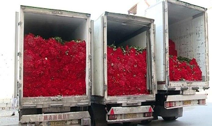 Senhora iraniana divorciada recebe 1 milhão de rosas como parte do casamento