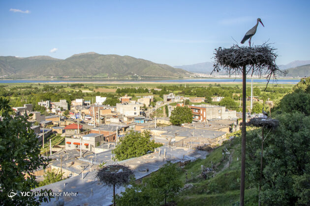 Migratory Birds in Western Iran 6