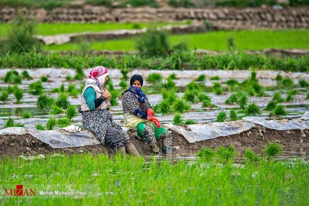 nature of northern Iran