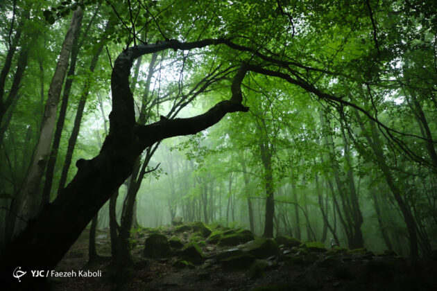 Nature of Northeastern Iran
