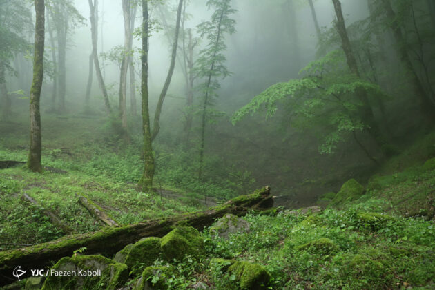 Iran's Nature in Photos: Gorgan Forests