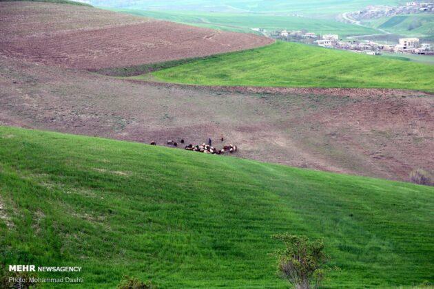 Nature of northwestern Iran 1