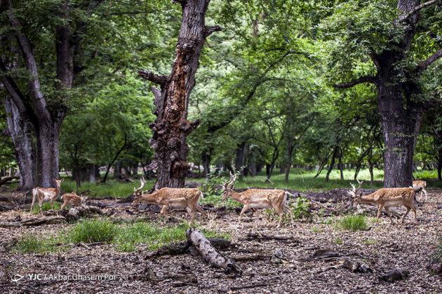 Iran's Wildlife