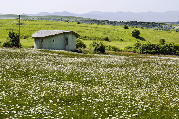 Iran's Nature in Photos: Plain of Chamomiles