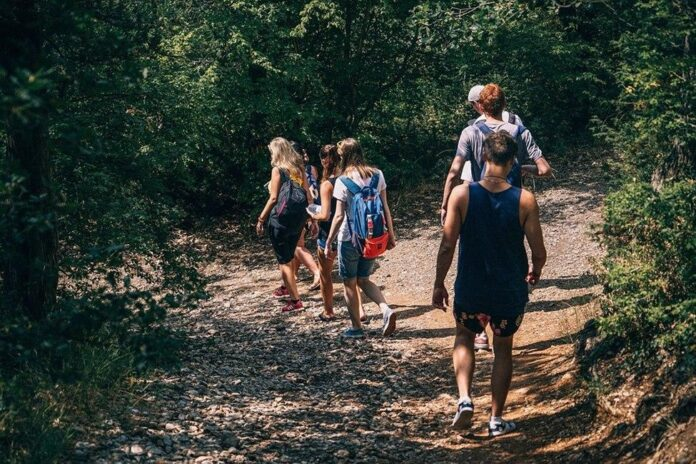 Expert Tips for Planning a Field Trip