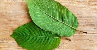 Here's a List of Things Kratom Leaves Can Do for You