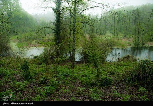 Nature of Northern Iran 5